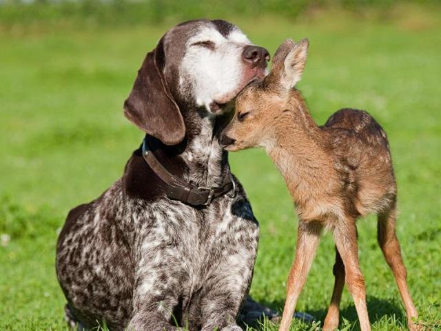 loveheals dog and doe